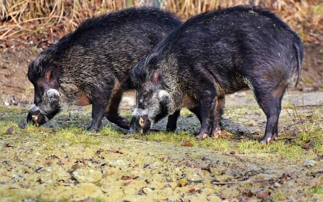 Dupla caçava os animais em área proibida na província de Salermo