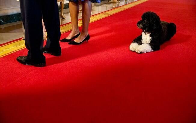 Bo espera enquanto Obama e primeira-dama participam de entrevista na Casa Branca (22/11/2013)