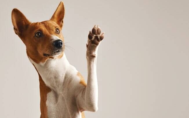 Confira 10 curiosidades sobre seu cachorro