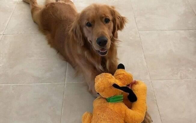 O brinquedo preferido de Atlas, um cachorro de serviço, é o Pluto