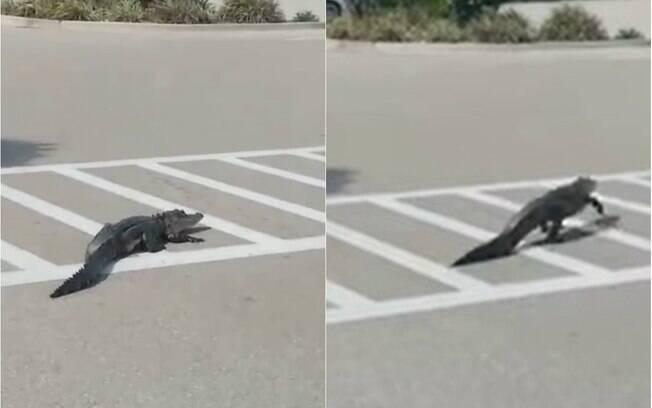 Imagens do animal atravessando a rua foram divulgados pelo canal norte-americano Fox News