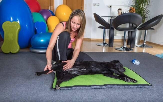 A massagem em cachorro traz muito benefícios, como melhor da circulação sanguínea e redução de estresse