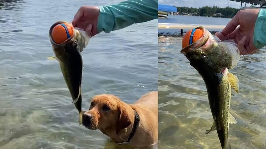 CC observando o peixe que pegou a bolinha