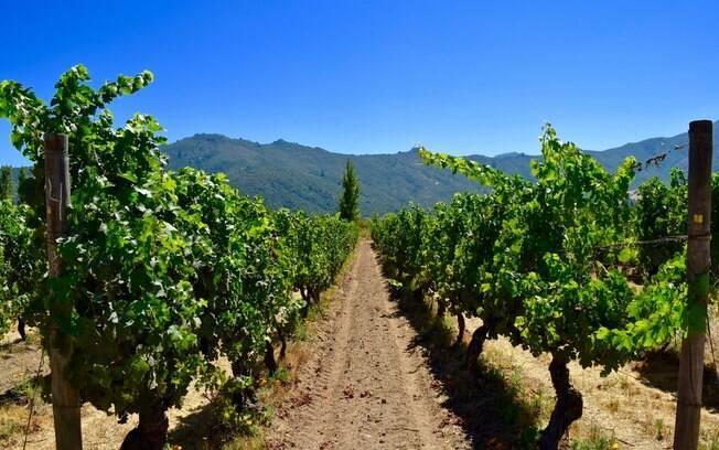 Valle de Colchagua, no Chile, é conhecido por suas vinícolas
