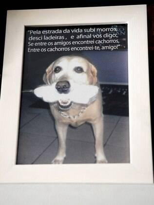 Imagem do cão de um amigo de Jonas que teve cerimônia de sepultamento feita pelo pastor