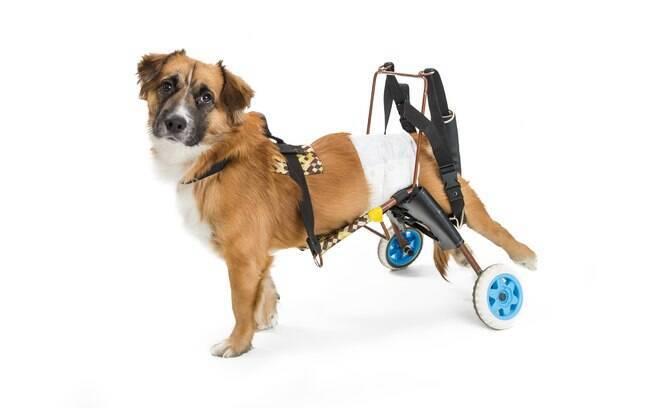 Cães deficiente são exemplos de pet que precisam de fralda