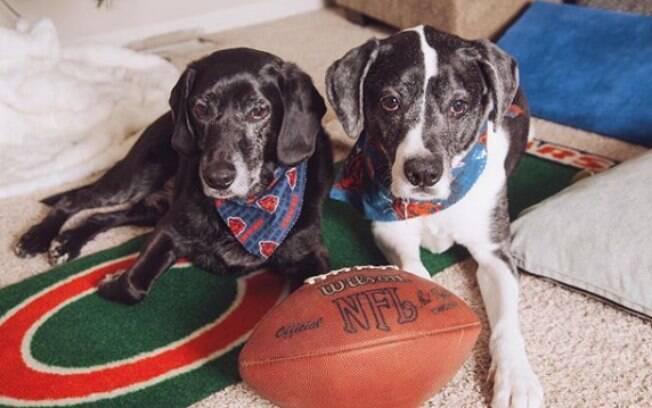 Os cães Sam e Cosmo quase foram sacrificados, pois seus donos se divorciaram e ninguém queria ficar com eles