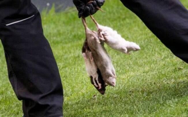 Ratos foram retirados por um funcionário do estádio. Eles foram atirados no segundo tempo de jogo