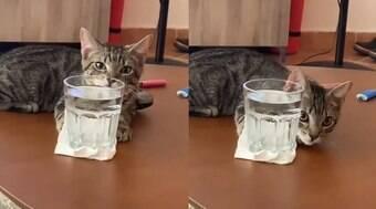Gato resolve ajudar tutor a lavar mesa da sala e viraliza na web
