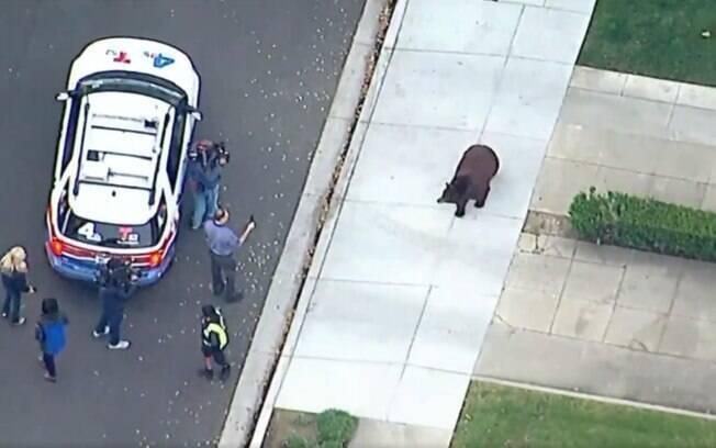 Urso cercado pela polícia