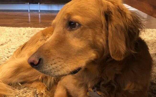 Hank, o cachorro corajoso que salvou sua família de um incêndio