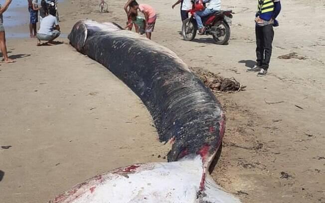 Baleia é encontrada morta em praia