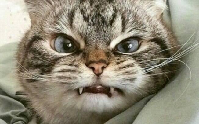 O comportamento de gato agressivo pode afastar muitas pessoas