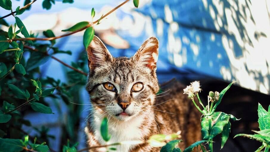 Mantenha a vacinação do gato em dia para evitar doenças graves