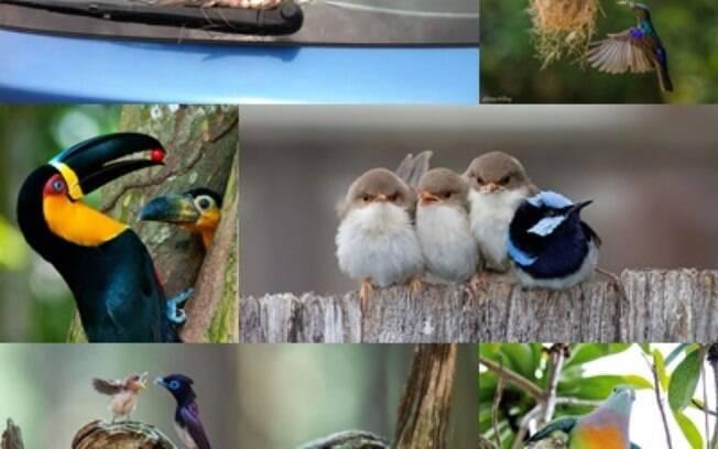Imagens de mamães pássaros e seus filhotes