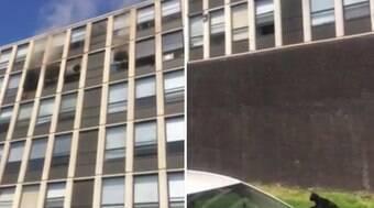 Gato salta do 5º andar de edifício em chamas e sobrevive; assista