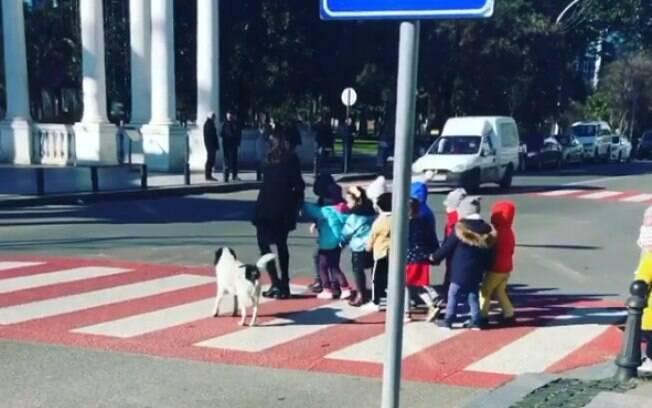 Conheça Kupa, cãozinho que ajuda crianças a atravessar a rua