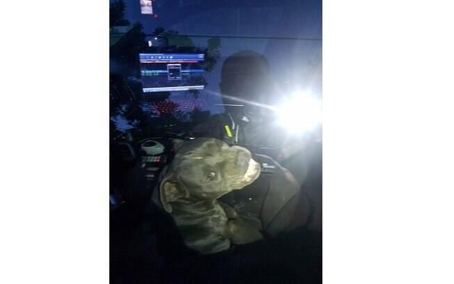 Pit bull invade viatura no Texas e come lanche de policiais