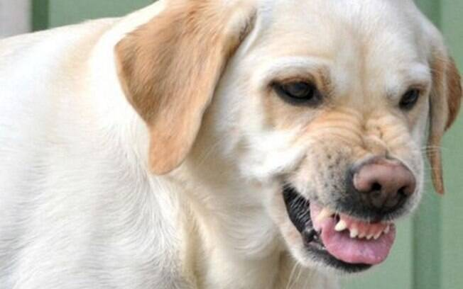 A convivência com um cão agressivo é bastante complicada