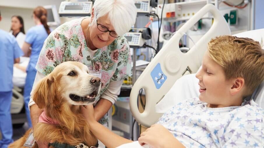 A terapia assistida por animais tem sido muito utilizada em tratamentos de doenças - foto ilustrativa