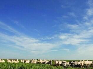 Bons ventos. Pecuária deve ter um 2015 bem positivo, com preços melhores no Brasil e no mundo
