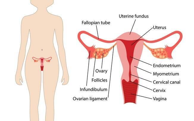 Ao ver desenho do corpo feminino, 45% não soube dizer onde ficava a vagina