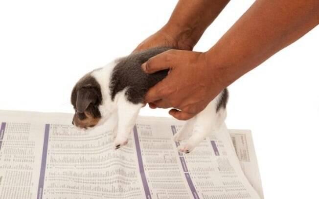 Confira hábitos importantes para implementar na rotina dos filhotes de cachorro