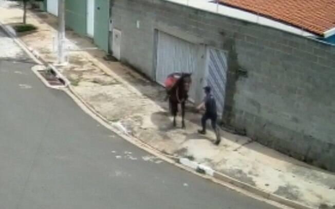 Câmera flagra homem agredindo cavalo com socos e chutes em Campinas