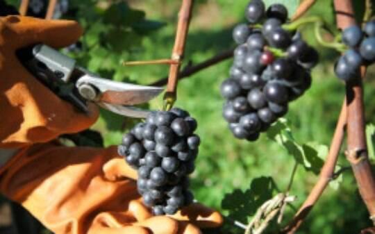 De olho na Copa, importadores britânicos miram no vinho brasileiro - Home - iG