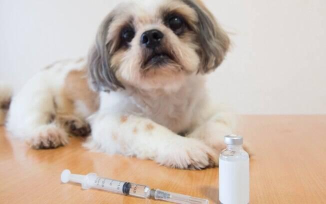 A diabetes é uma doença que tem atingido muitos animais de estimação