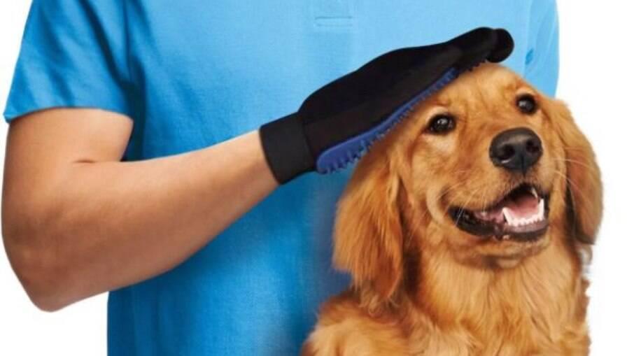 Escove o pelo do seu gato ou do seu cachorro enquanto faz carinho nele
