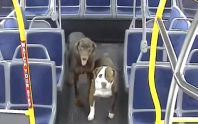 Cães perdidos em ônibus