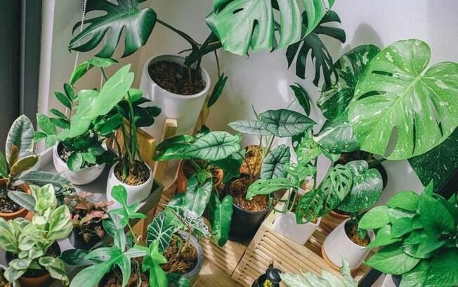 11 espécies de plantas que melhoram a qualidade do ar