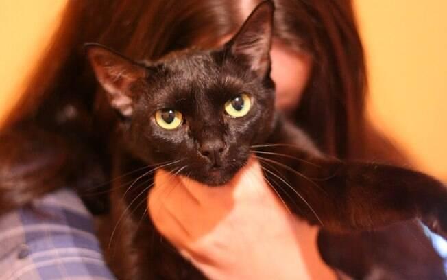 Pixel é a gata mais atrapalhada e confusa dos três gatos de Jéssica Aline, mas é também a mais doce