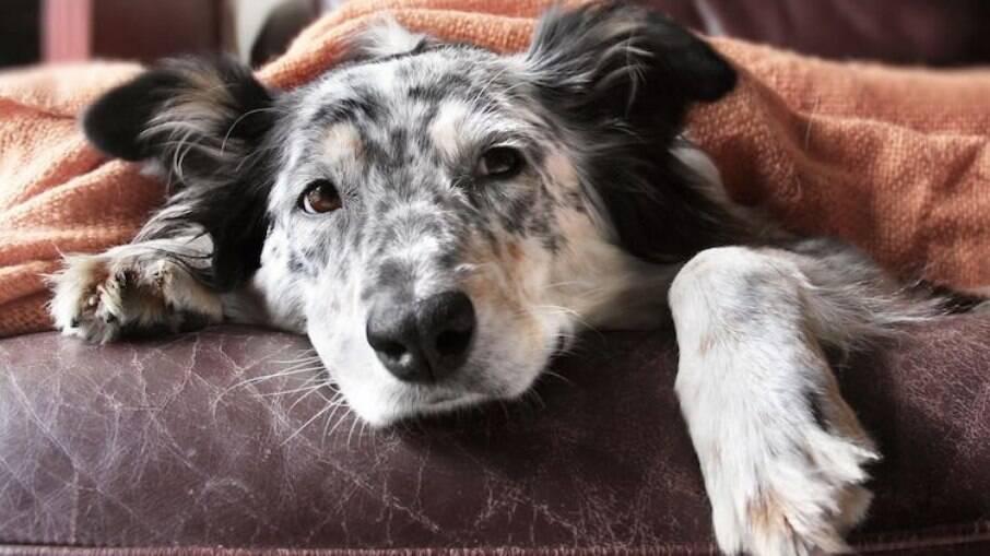 A tosse do canis é pouco comentada, mas é bastante comum em épocas de frio