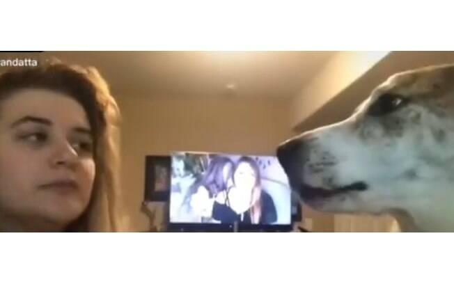 Cão se irrita com imitações feitas pela dona