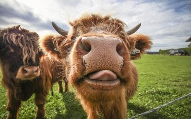 Esses animais engraçados foram flagrados em momentos ótimos e vão divertir seu dia