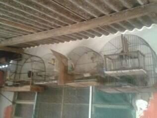 Homem é preso em casa com 19 pássaros silvestres em forma irregular
