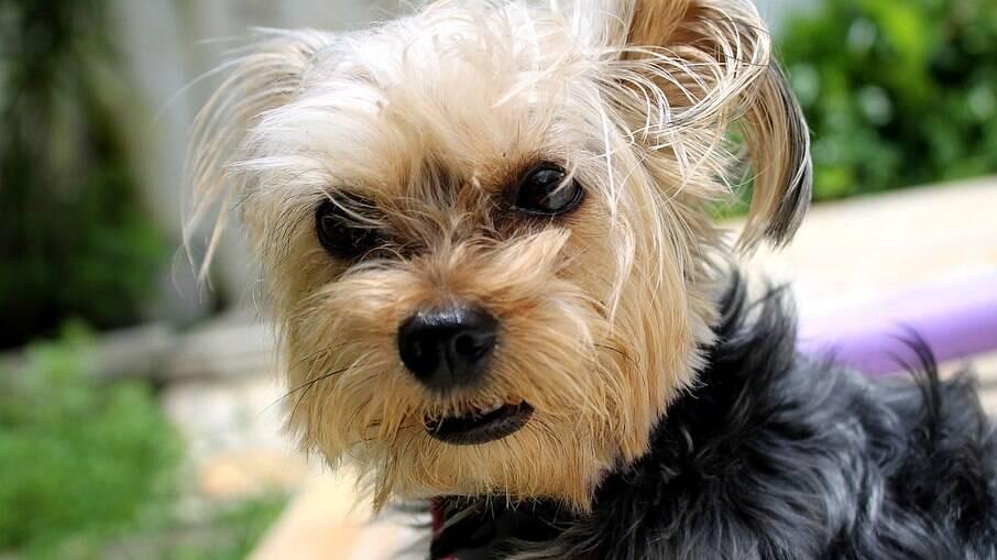 Os arrepios podem indicar sensações diferentes, boas e ruins, no animal