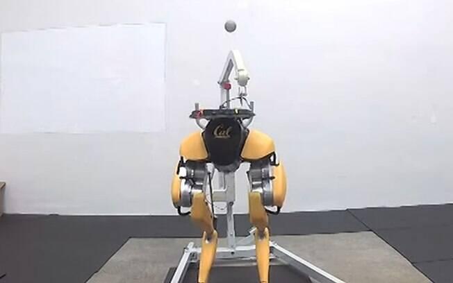 Robô avestruz cabeceia bola