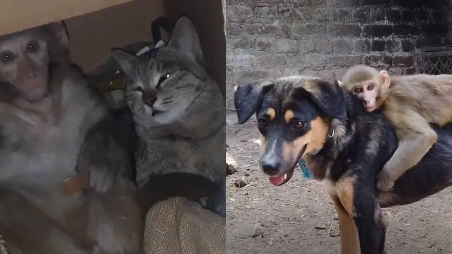 Avni começou a se socializar graças ao gatinho Billo, e encontrou sua