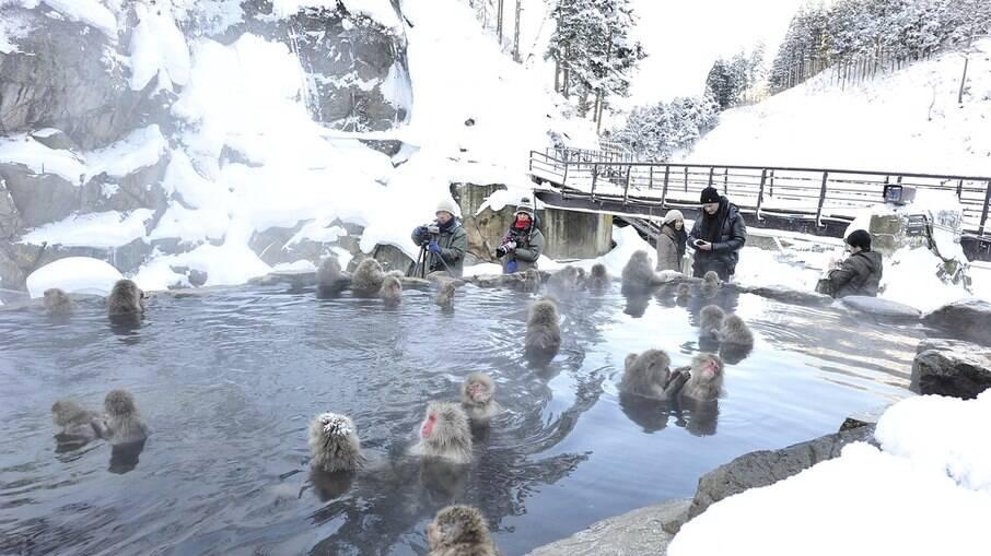 """""""Essa é a única espécie de macacos do planeta que adora a neve e os onsen"""", diz Vanessa"""