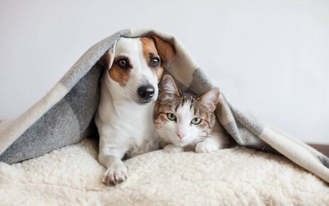 No frio, devemos prestar atenção a doenças, vacinas, alimentação e até os passeios com os pets