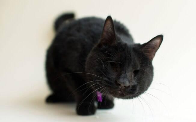 Ivy foi resgatado de um local que vendia gatos para rituais.