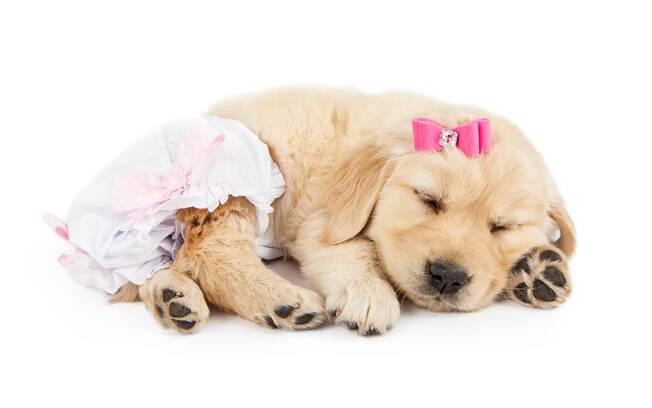 Alguns pets precisam de fralda para cachorro