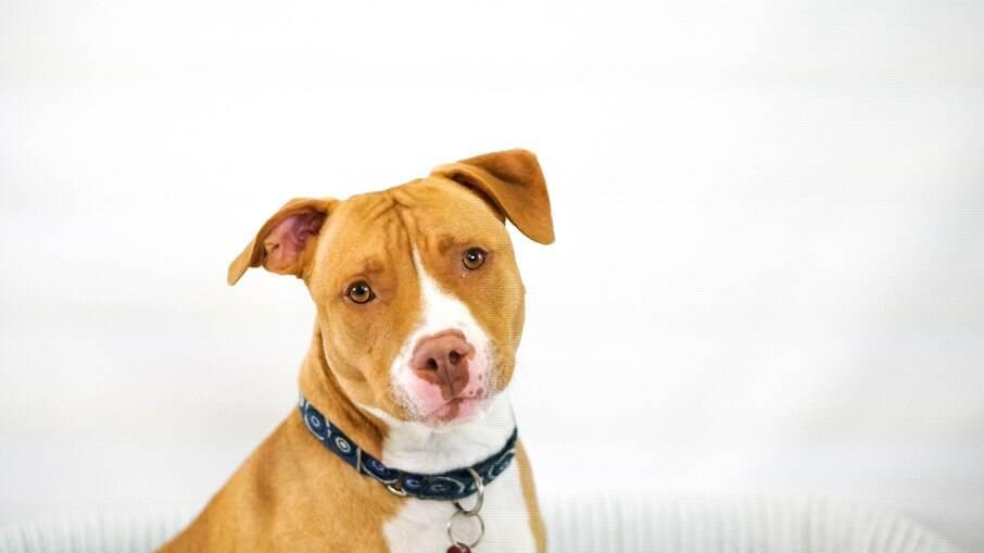 Cortar orelhas ou cauda de cães por padrões estéticos é considerado crime