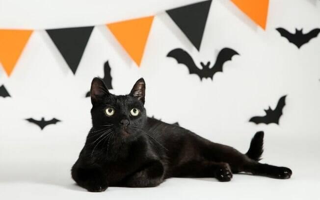 Mitos e verdades sobre gatos pretos