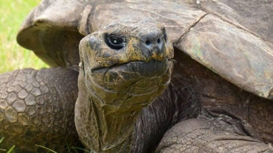 Tartaruga Jonathan é considerado o animal terrestre mais velho do mundo
