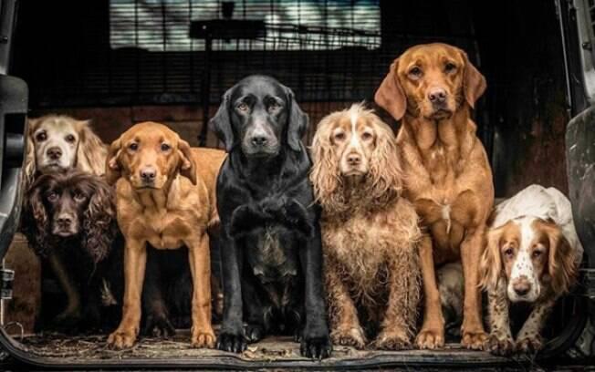O concurso premiou as melhores fotos de cachorros de 2018