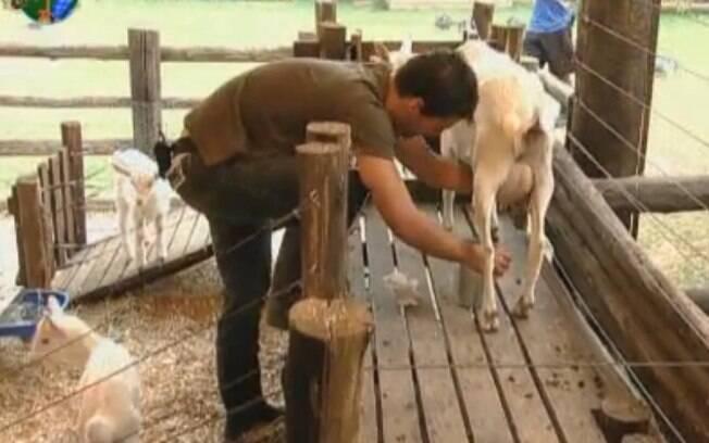 Thiago Gagliasso foi punido durante a tarefa das cabras